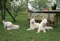 Elvísek, Byorinka a štěňátka